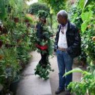 La plante verte au Jardin du Ruisseau
