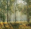 Lis skogsbadbild.jpg