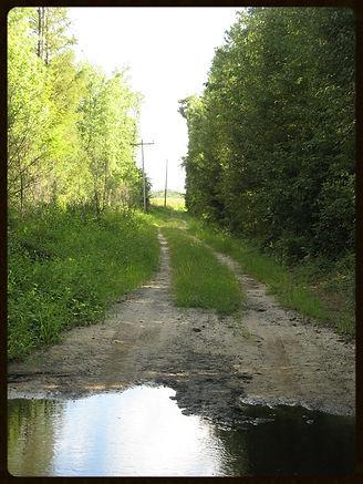 Marion County, SC. The landscape of Lightningstruck: A Novel. By Ashley Mace Havird.
