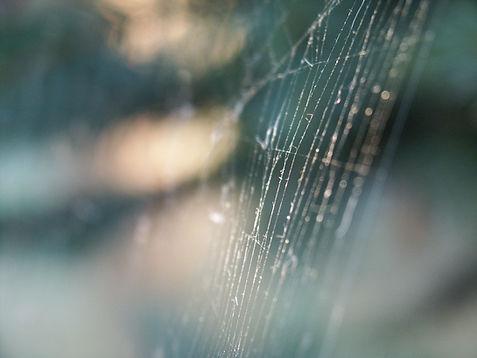 web-1518595.jpg