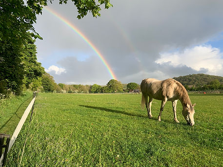 Ben Murphy Barrow Field + horse.jpg