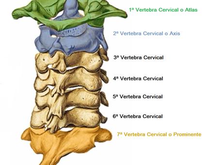 Repositionnement de l'Atlas (1ère vertèbre cervicale)