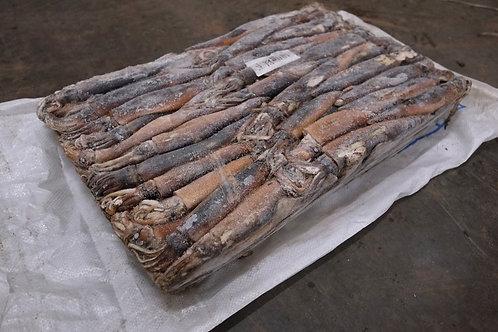 ปลาหมึกอาเจน (Illex Squid)