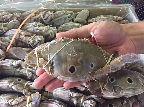 ปูดาว/ ปูจุด (Three Spot Crabs)
