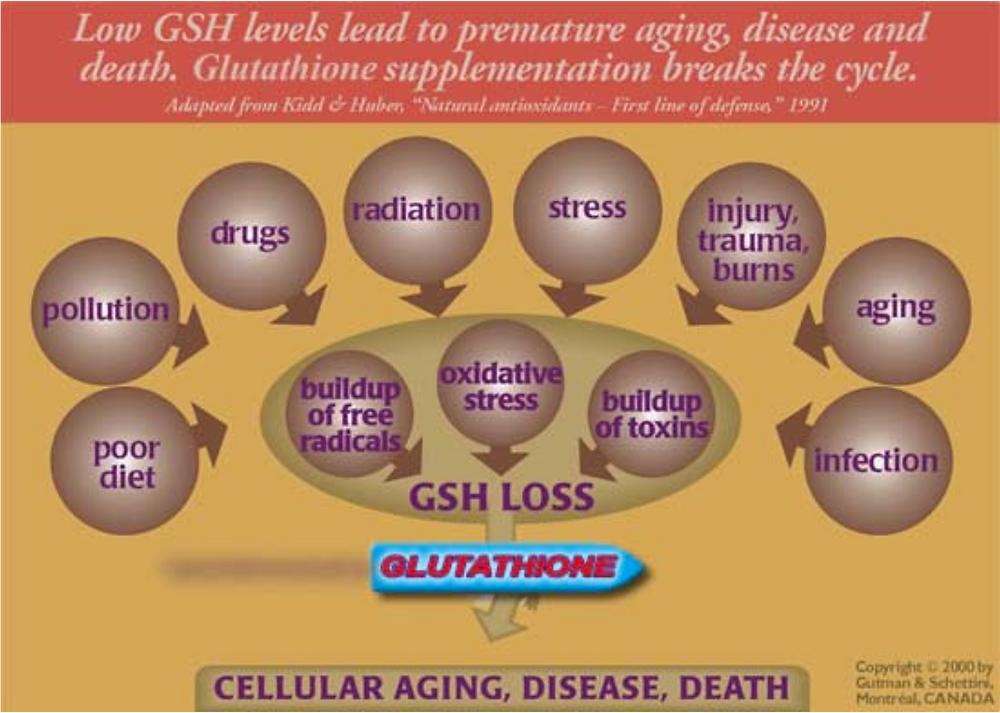 Aging process & glutathione