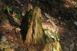 檜型錄攝影/歐德系統傢俱木林_171116_0005