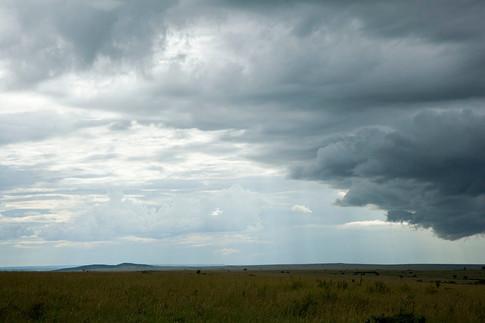 Regn over savannen.