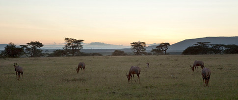 Aftenstemning på savannen.