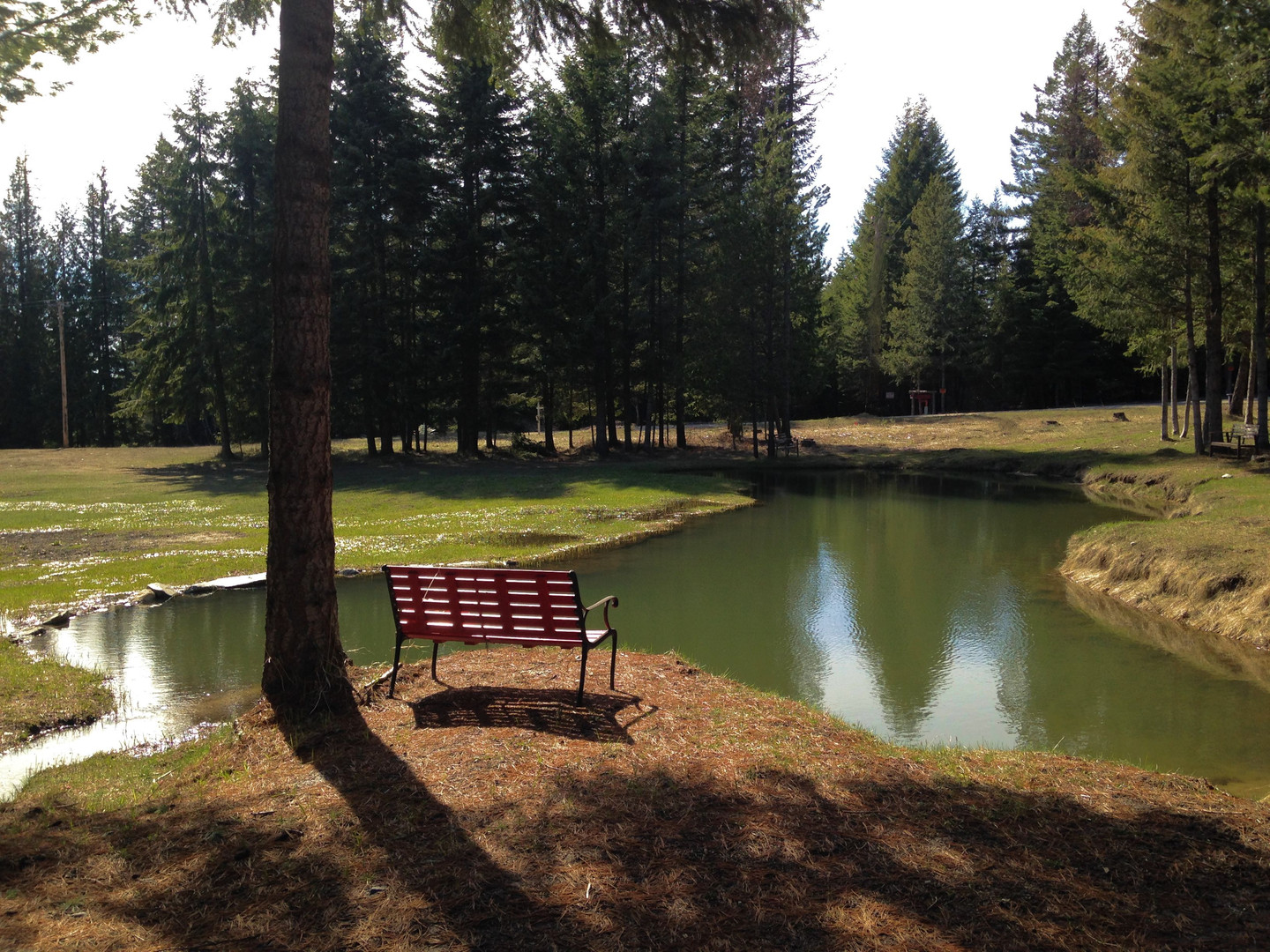 Picturesque pond in meadow at Creek Bridge Meadow wedding venue in Careywood Idaho.
