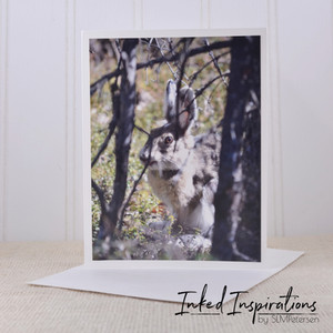 Why did I Choose Photography Cards?