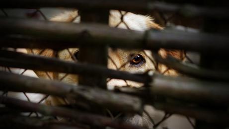 עבירת התעללות בבעלי חיים