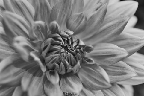 Flower6 bw.jpeg