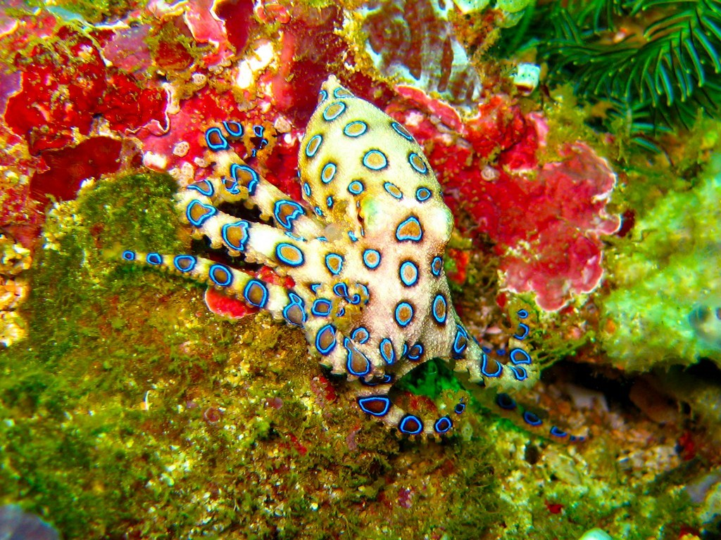coco-coral.jpg