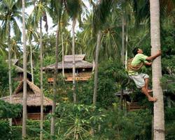 coco-coconut-tree climber.jpg