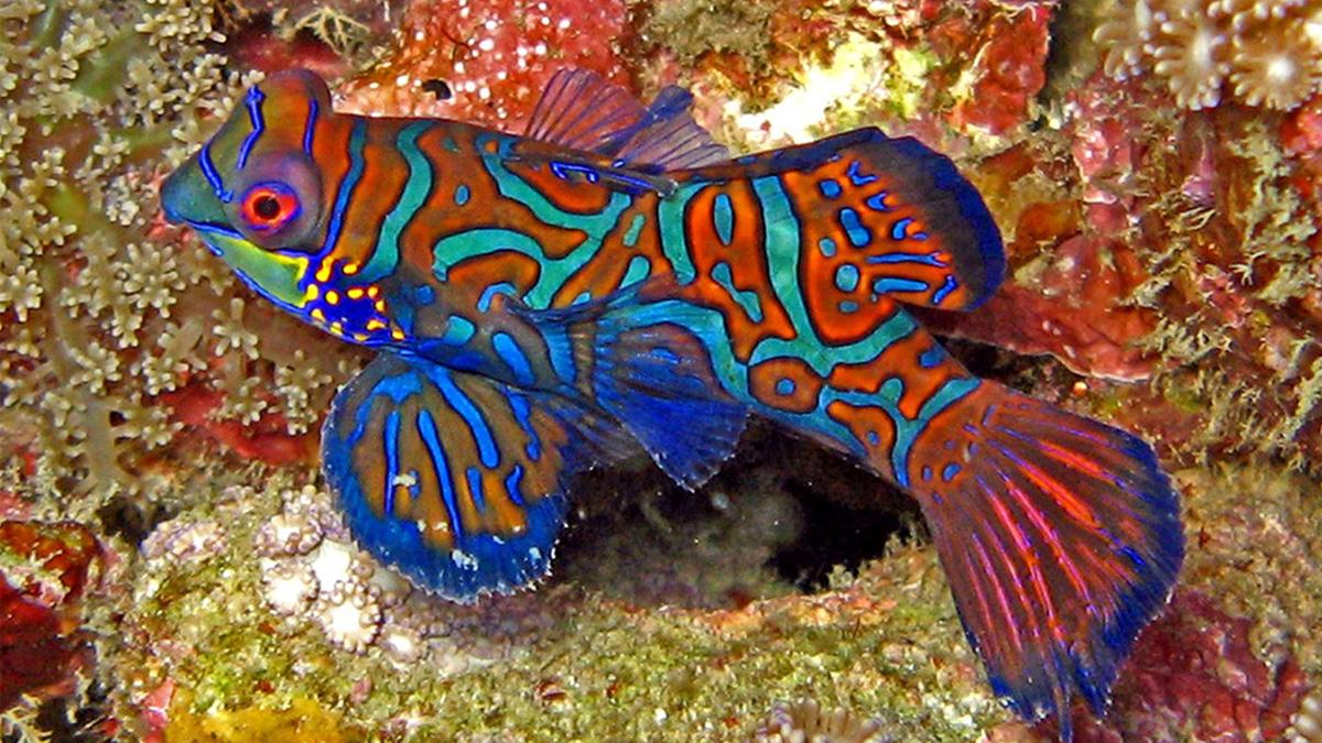 coco-fish.jpg
