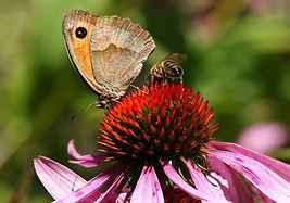 papillon et abeille.jpg