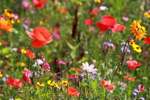 fleurs sauvages 5.jpg