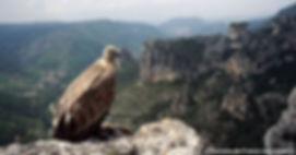 maison des vautours.jpg