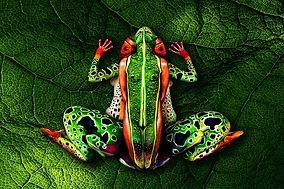 grenouille pour le site.jpg