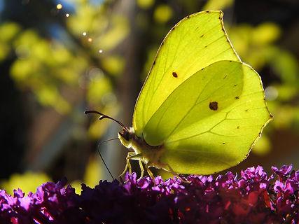 Festival_des_papillons_photothèque_Micr