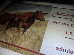 Schuler Red Angus
