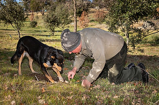 Dick and Bella Truffle Hunting - Durran