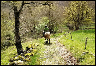 balade-cheval-nature.jpg