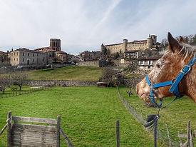 cheval devant palais des eveques