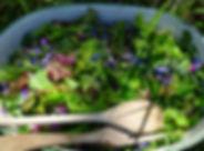 salade-plantes-sauvages.jpg