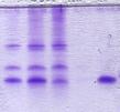 Proteinherstellung Molfolding GmbH