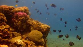 Indonesia Paling Maju Dalam Konservasi dan Pengelolaan Perikanan Berkelanjutan
