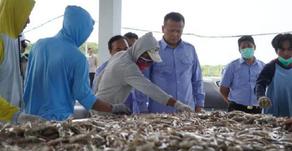 Estimasi Panen Perikanan Indonesia April-Juni Capai 450 Ribu Ton