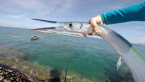 Ikan Caroang Tewaskan Nelayan di Pangandaran