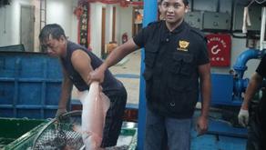 KKP Ingin Ekspor Ikan ke Eropa dan Jepang Tanpa Bea Masuk