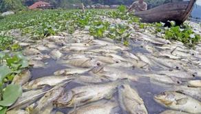 Laut Makin Panas, 60 Persen Ikan Laut Terancam Punah