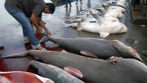 5 Jenis Ikan yang Tidak Boleh Dikonsumsi Oleh Ibu Hamil