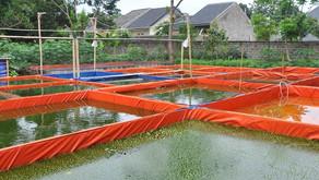 Peran Alkalinitas pada Tambak dan Kolam Ikan