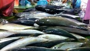 Mengapa Ikan Mengeluarkan Bau Amis?