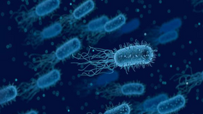 Semakin Tinggi Padat Tebar, Semakin Banyak Bakteri pada Tambak