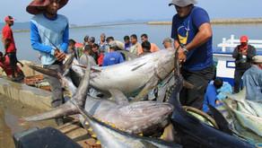 Eksistensi Ekspor Perikanan Indonesia. Berjaya di Tengah Perang Dagang