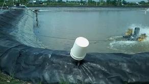 Cegah Timbulnya Amonia di Tambak Saat Kemarau dengan Geomembrane