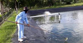 4 Masalah yang Kerap Muncul Pada Perairan Tambak