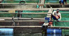 Langkah Budidaya Ikan dan Udang di Masa Pandemi