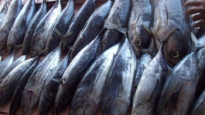 Ekspor Tuna Harus Ikuti Peraturan Internasional