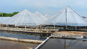 Rumah Prisma, Inovasi Baru Untuk Tingkatkan Produksi Garam