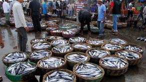 Aceh Pasarkan 2.388 ton Hasil Perikanan Hingga Maret 2019