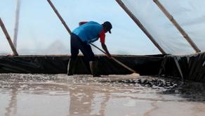 3 Teknologi Untuk Meningkatkan Hasil Panen Tambak Garam