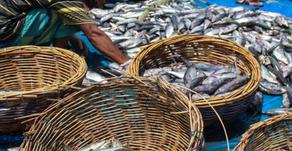 Miliki 37 Persen Hasil Perikanan, Maluku Akan Jadi Lumbung Ikan Nasional