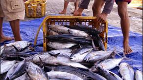 Inilah Penyebab Banyak Orang Alergi Terhadap Ikan Tongkol