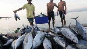 Pemerintah Mengkaji Ulang Sistem Subsidi Perikanan